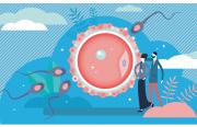 L'endométriose isolée (sans autre facteur d'infertilité associée) altère-t-elle la qualité ovocytaire ?